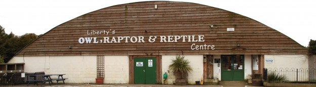 Liberty's Owl, Raptors And Reptiles Centre. Birds Of Prey In The New Forest