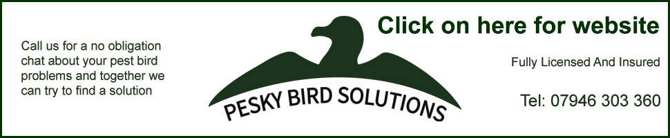 Pesky Birds Solution Website