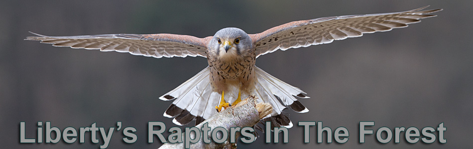 Raptors In The Forest