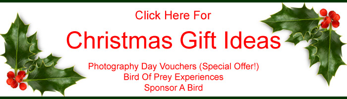Click Here For Our Christmas Shop